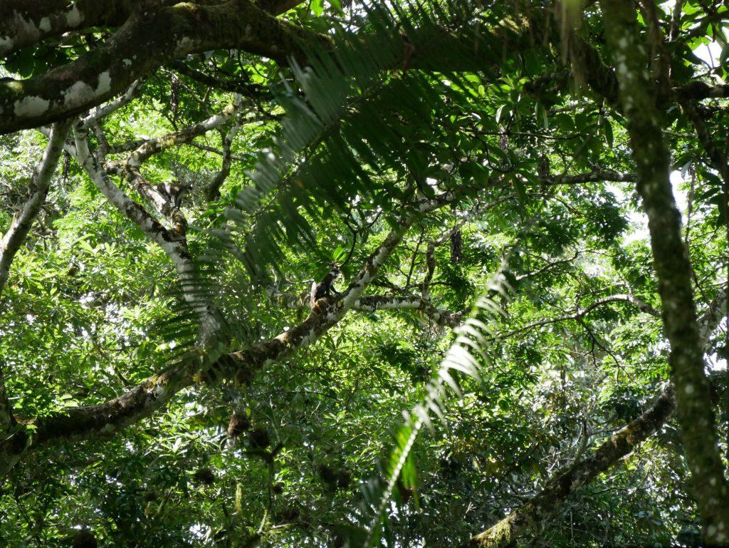 Urlaub im Regenwald