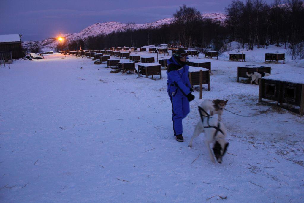 Huskytour Norwegen
