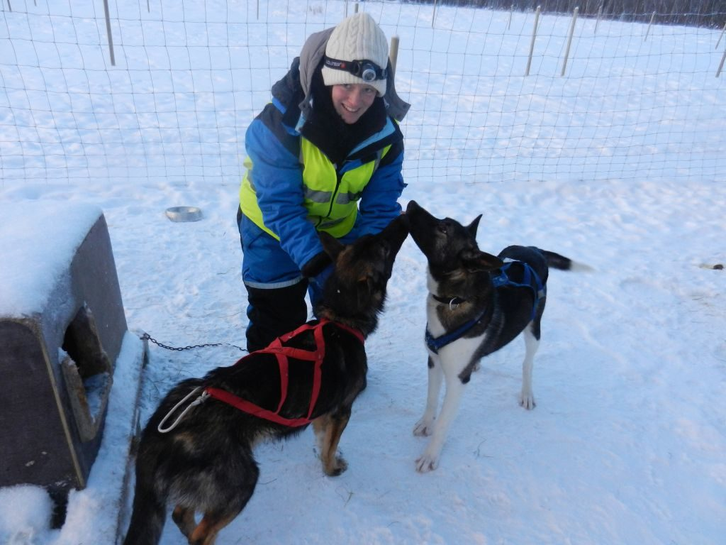 Huskytour Norwegen Pasvik