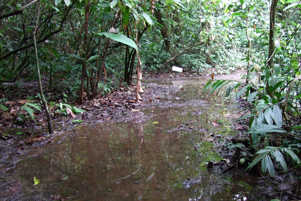 Costa Rica Rundreise Tortuguero