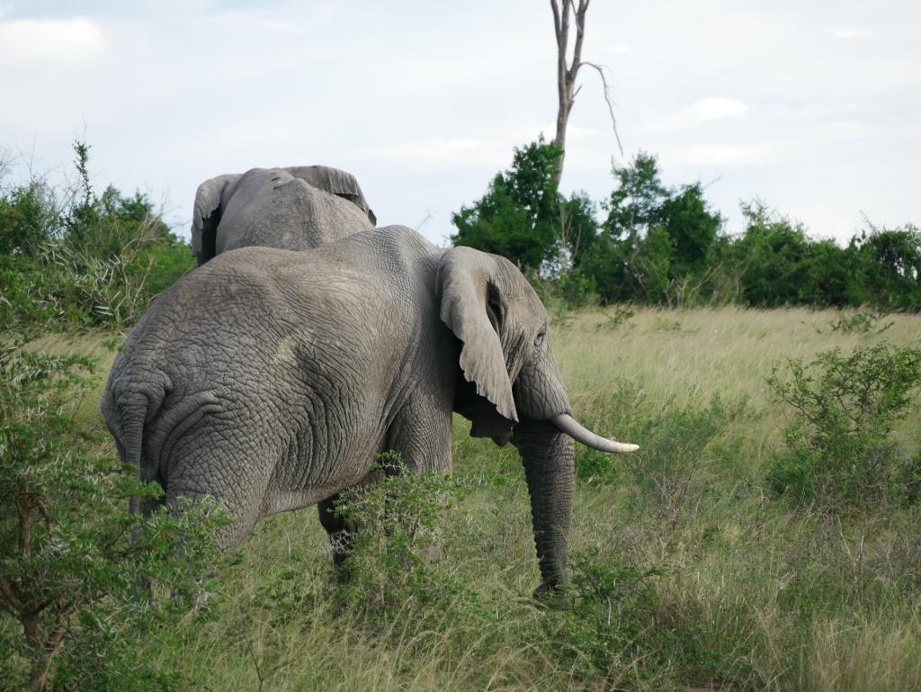 Elefantenherde Uganda