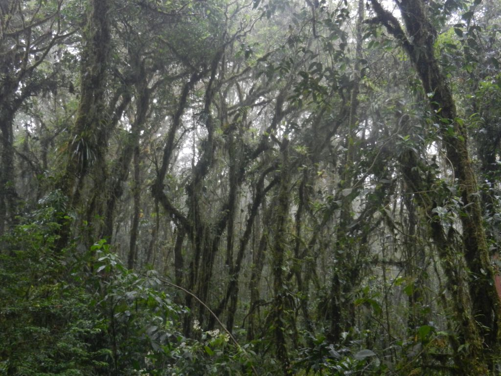 Santa Elena Nebelwald