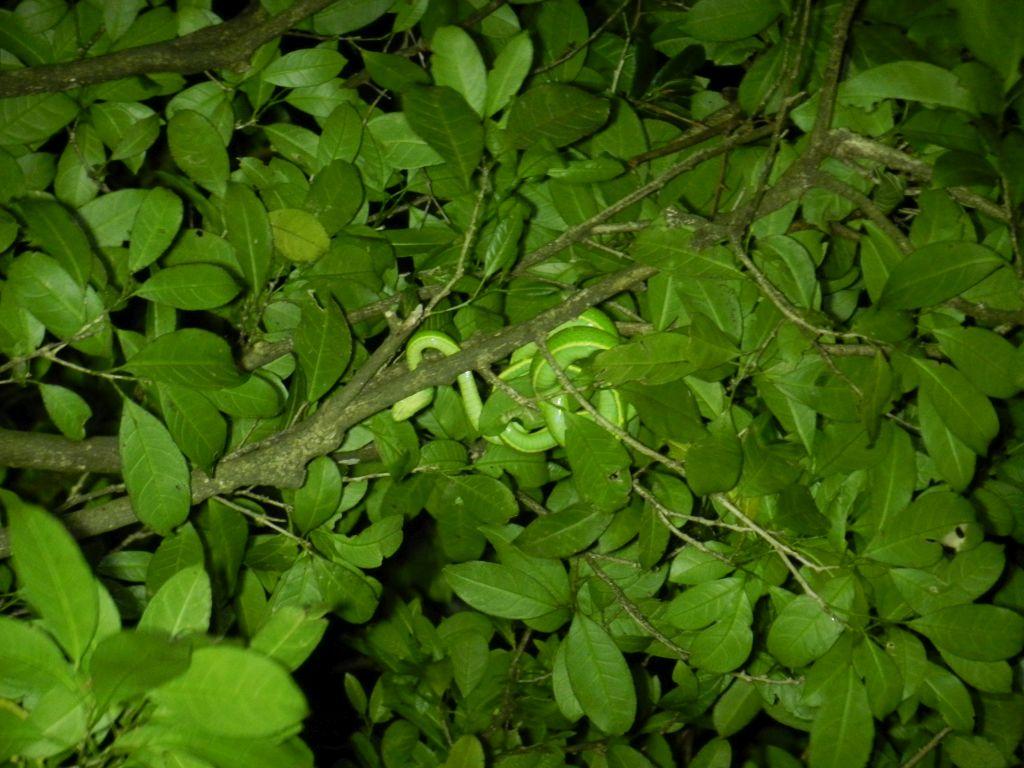 Schlange Nachtwanderung Monteverde