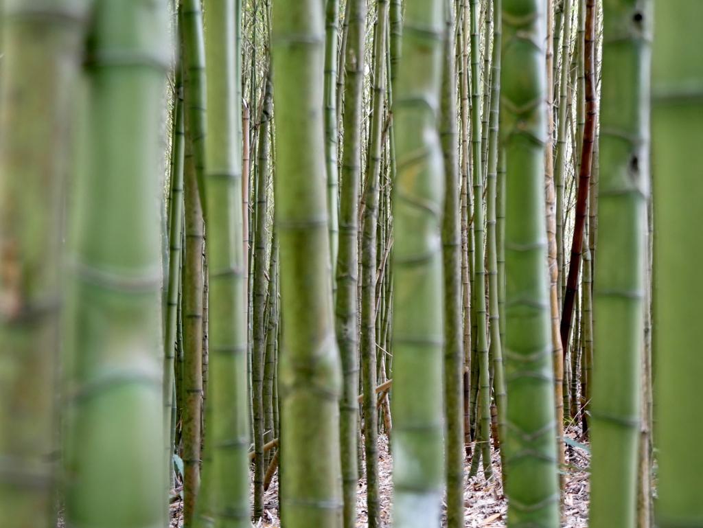 Bambuswald Terra Nostra Park