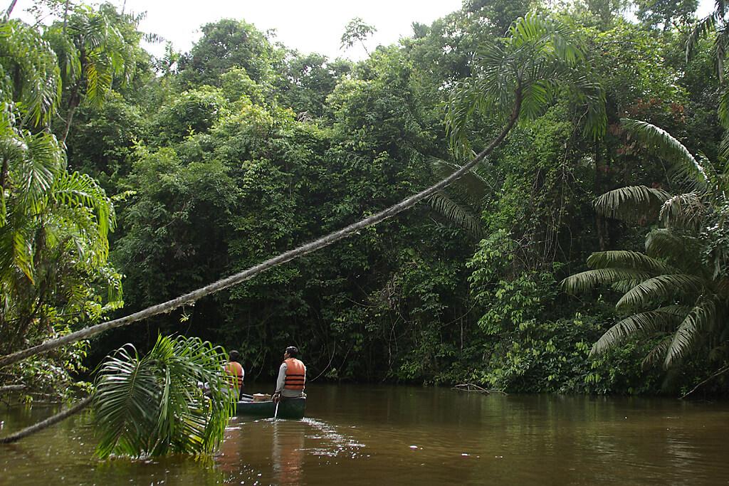 Ecuador Kanu_Dschungel