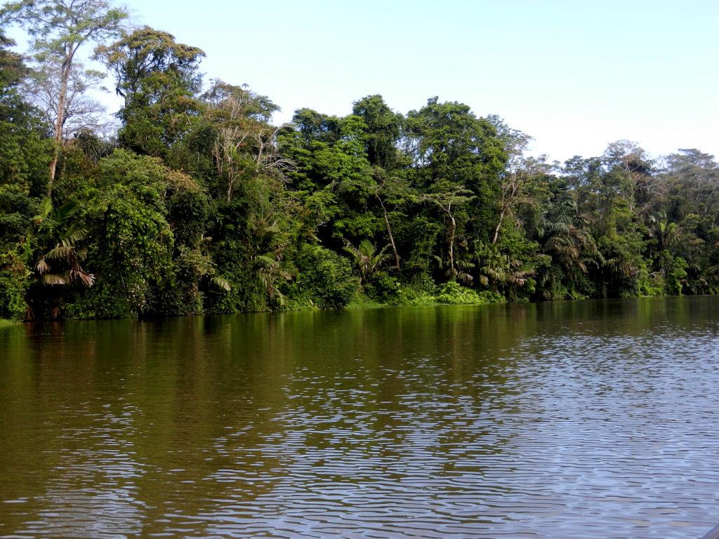 Urlaub im tropischen Regenwald
