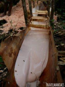 Sago Herstellung West Papua
