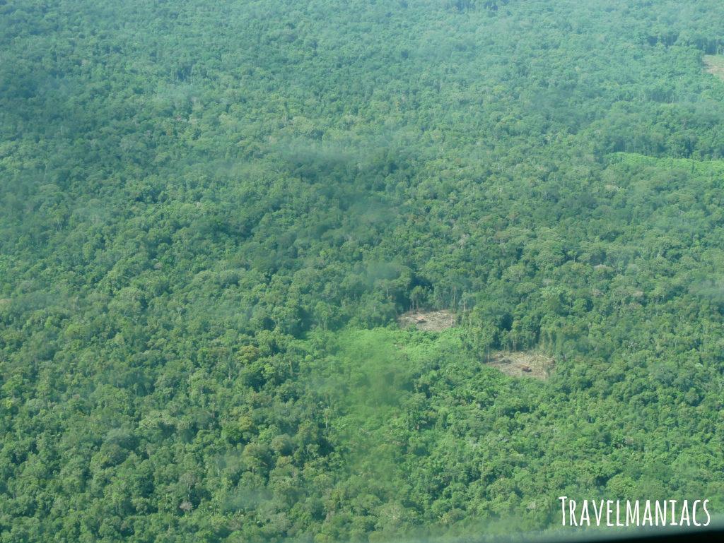 Dschungel Papua