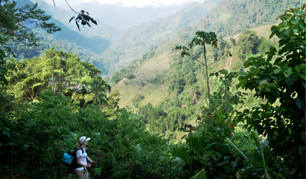 Aussicht Dschungel