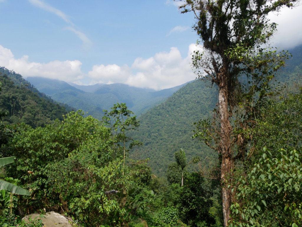 Regenwald Ciudad Perdida Trekking