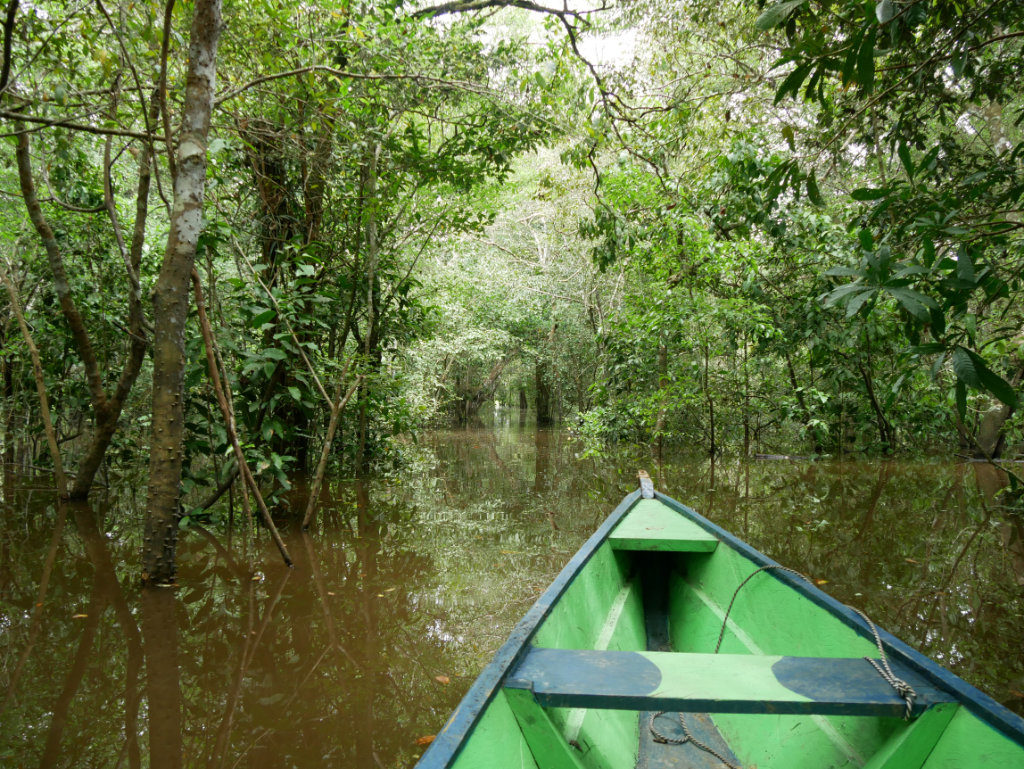 Floating Forests Amazon