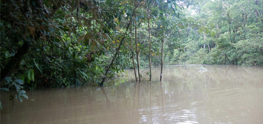 Seitenarm Matamata Fluss