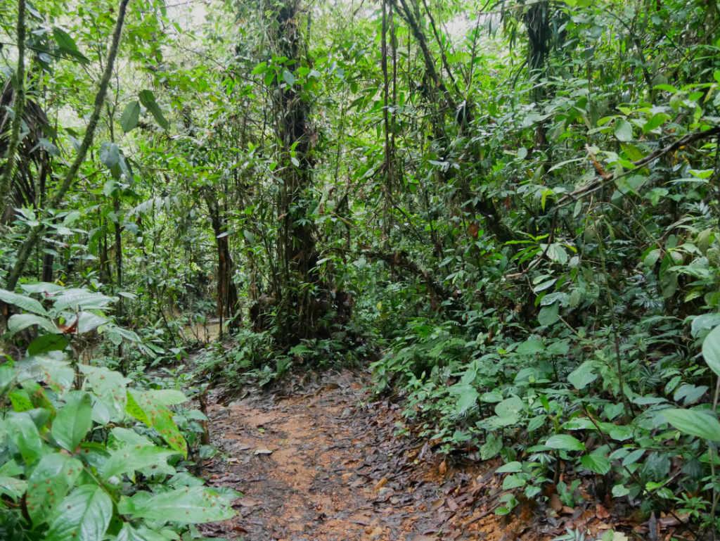 Dschungel San Cipriano