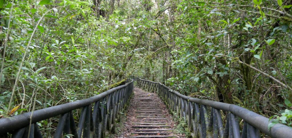 Isla Corota Wanderung