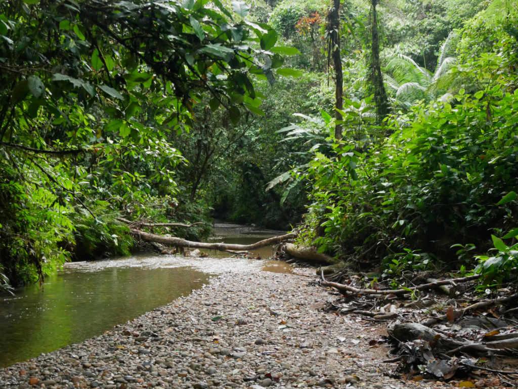 Regenwald San Cipriano Kolumbien