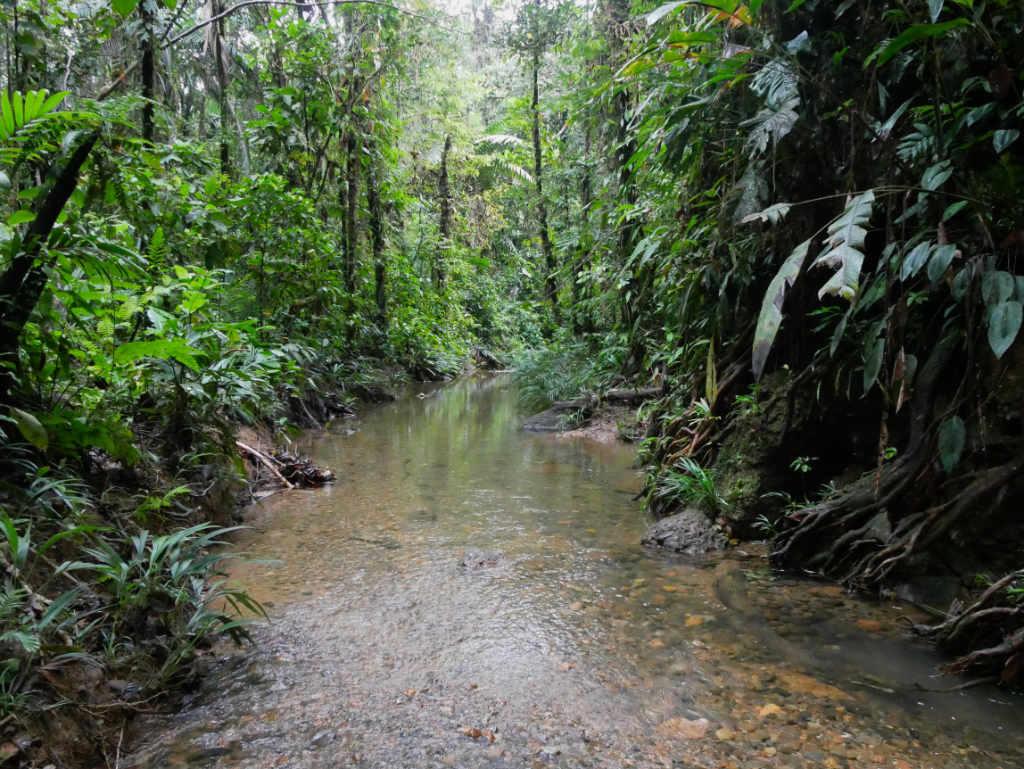 San Cipriano Kolumbien Regenwald