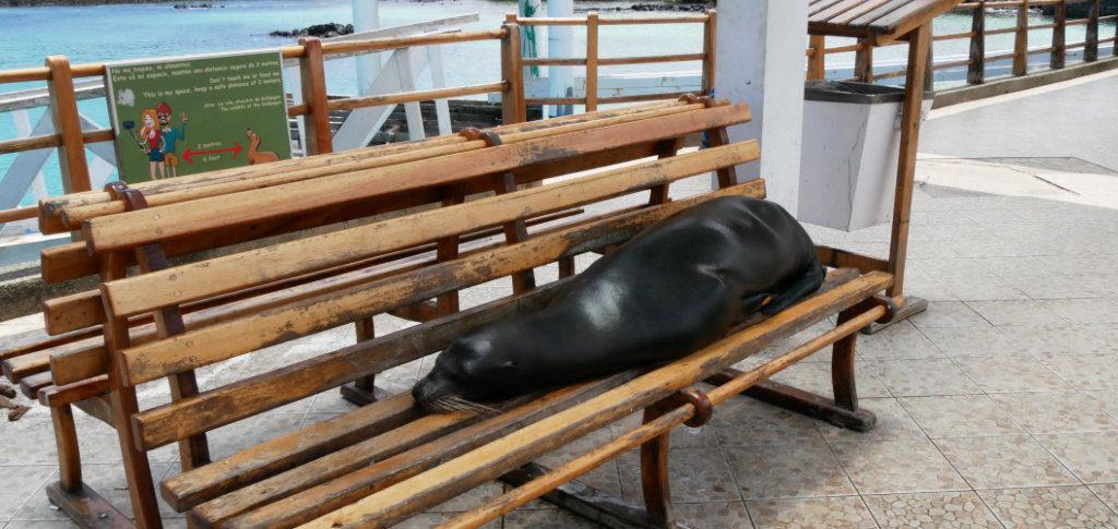 Bootsanleger Puerto Ayora Seelöwe