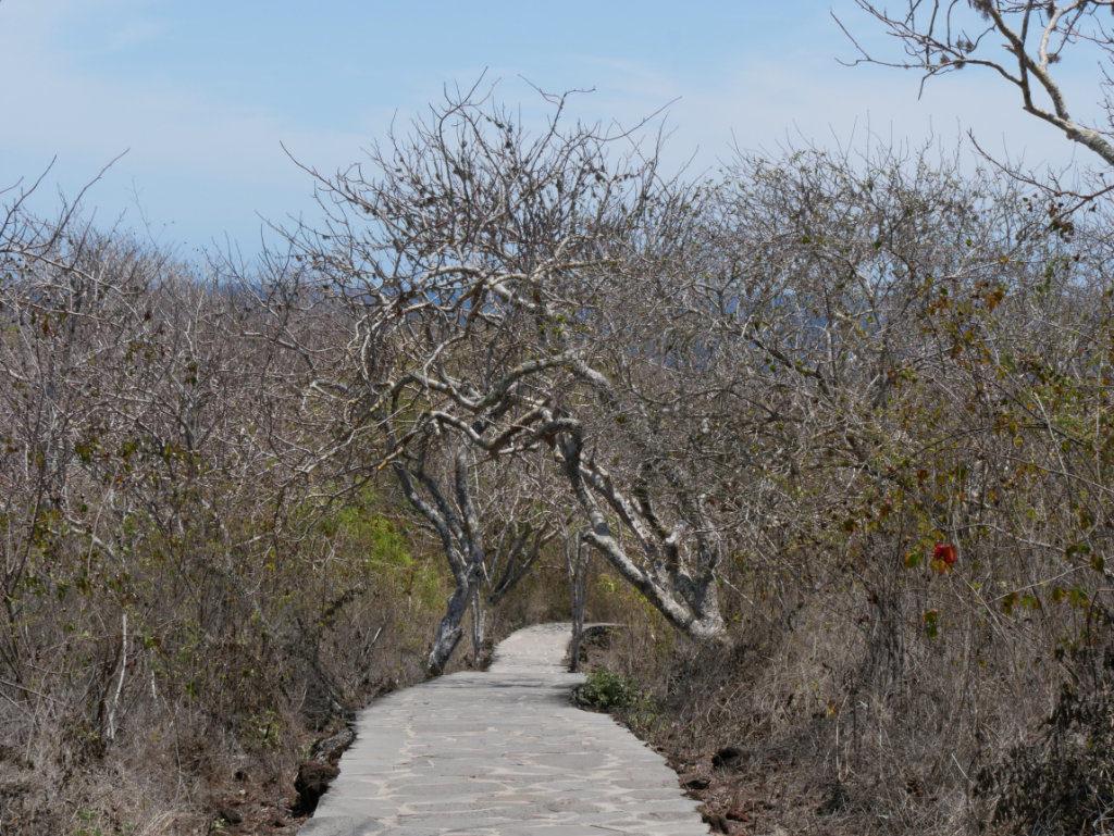 Cerro Tijeretas Weg