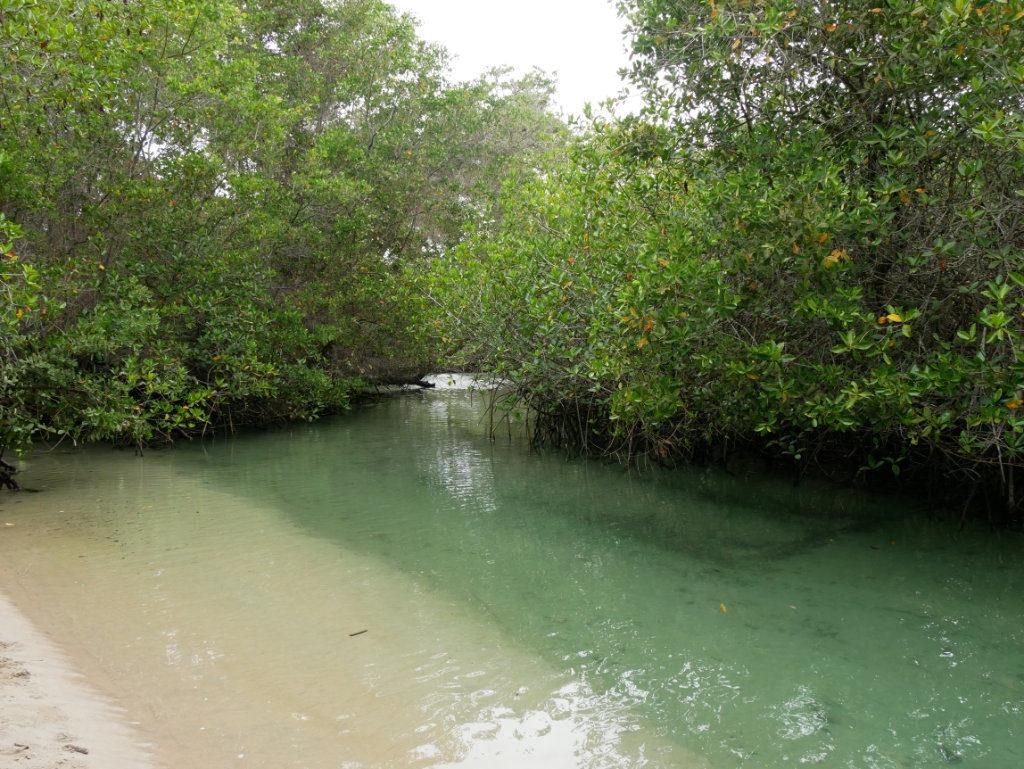El Estero Isabela