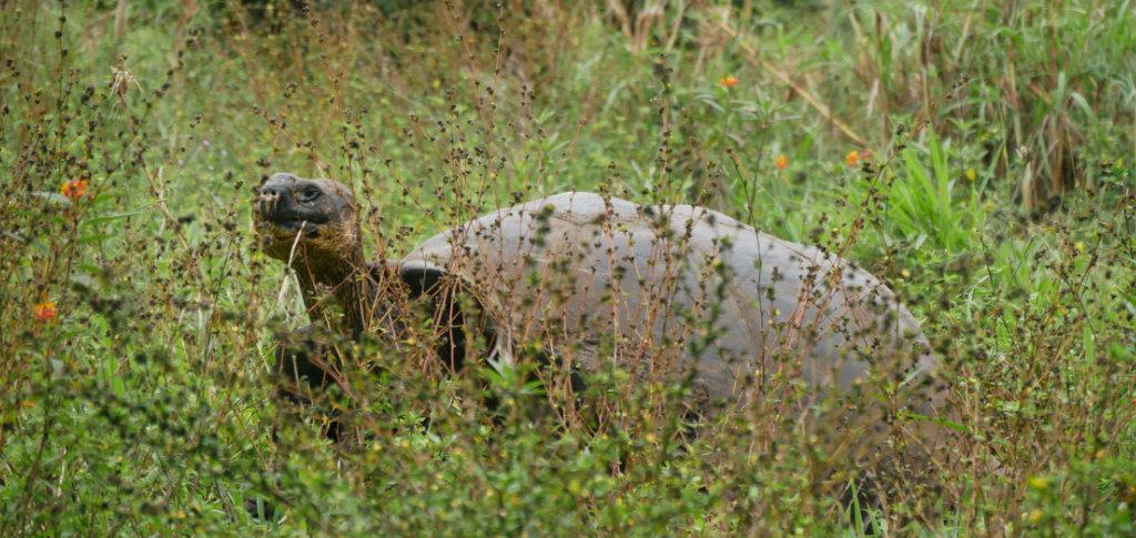 Finca El Chato Ausflug Santa Cruz Galapagos