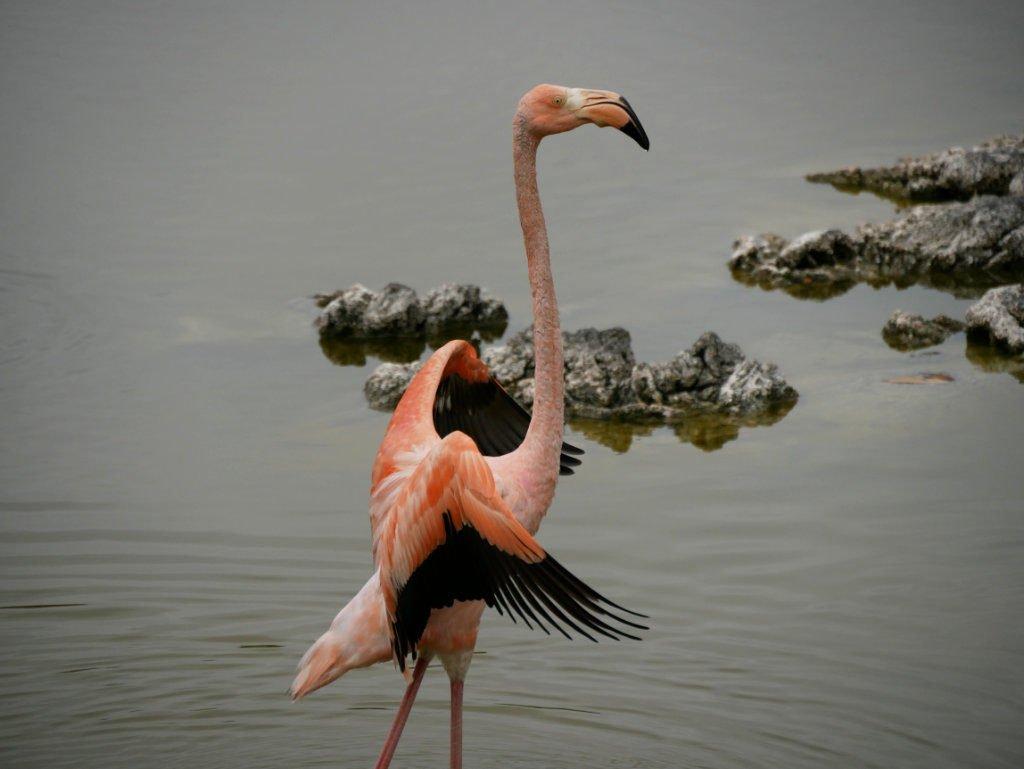 Flamingo Isabela www.travelmaniacs.de