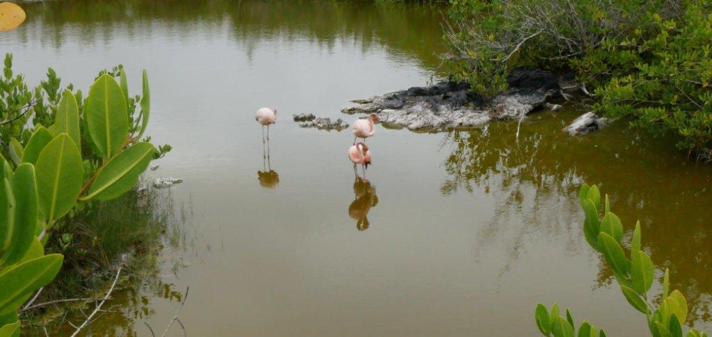 Isabela Laguna de los Flamingos