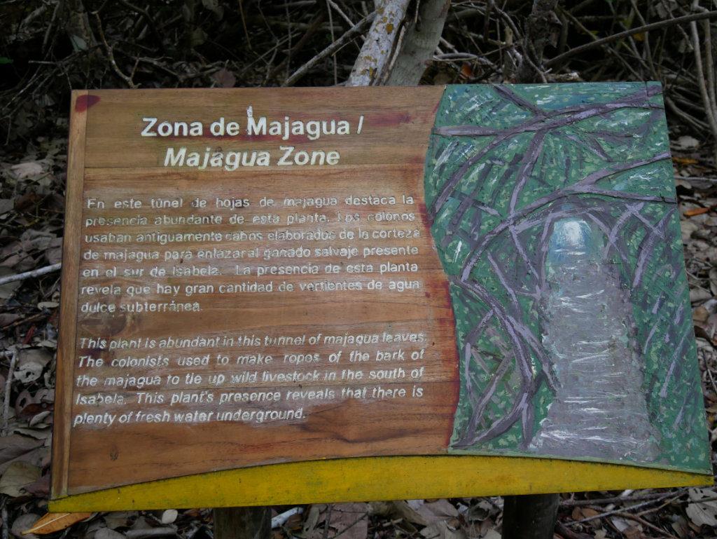 Mangroven Info El Estero