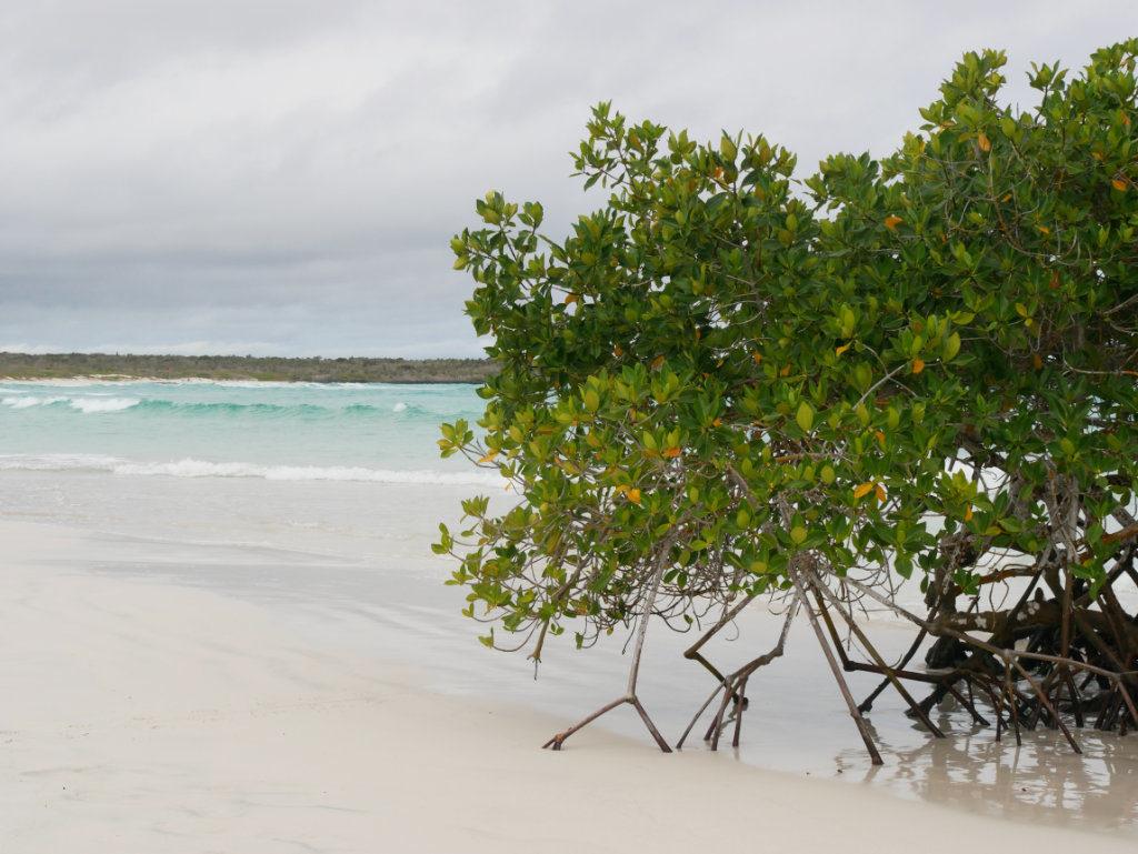 Mangroven Playa Brava