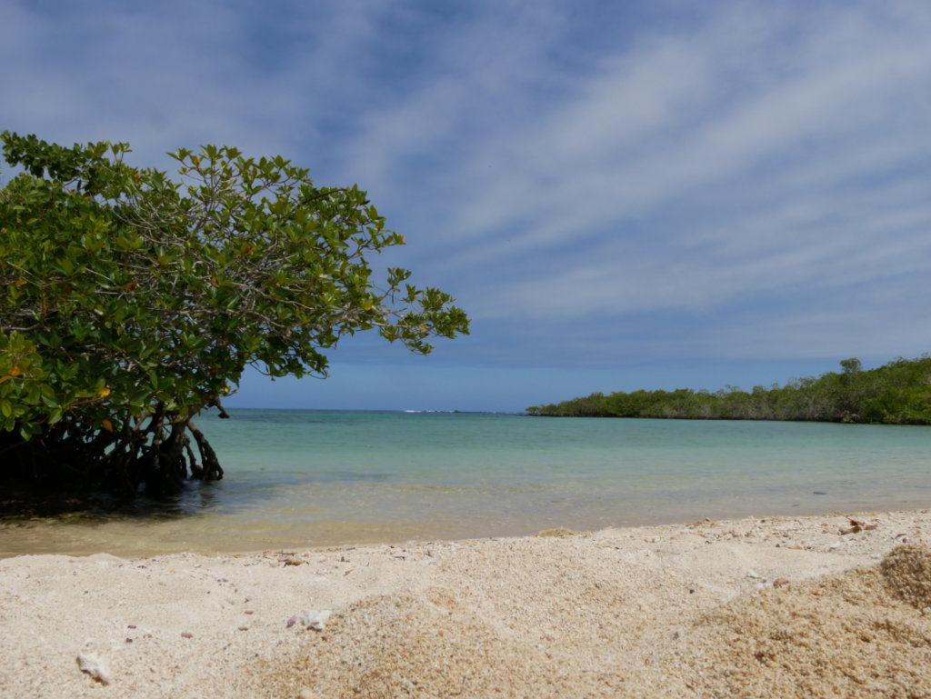 Playa Los Alemanes Galapagos