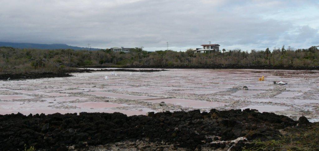 Salzsee Santa Cruz Galapagos