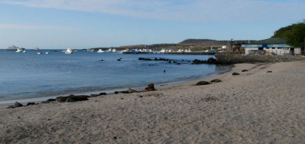 San Cristóbal Seelöwen Galapagos