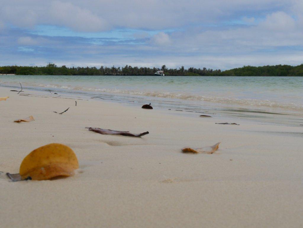 Santa Cruz Galapagos auf eigene Faust