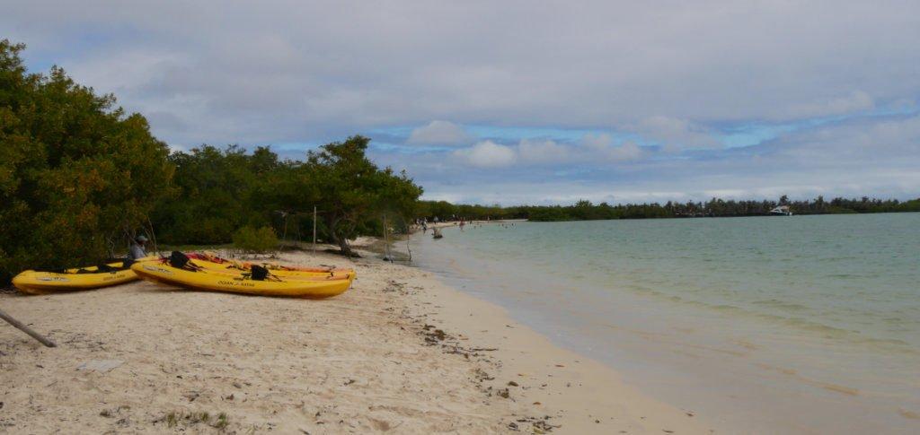 Tortuga Bay Strand Santa Cruz Galapagos