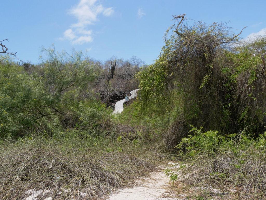 Weg zum Aussichtspunkt Cerro Tijeretas