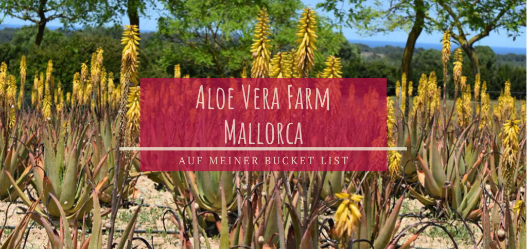 Aloe Vera Farm Mallorca Ausflugsziel