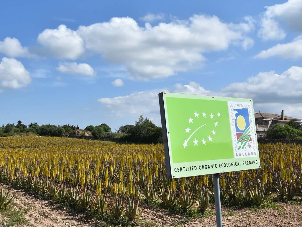 Aloe Vera Farm Mallorca Bio